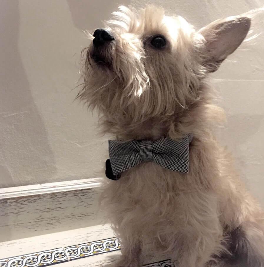 Hundehalsband mit Fliege Glencheck