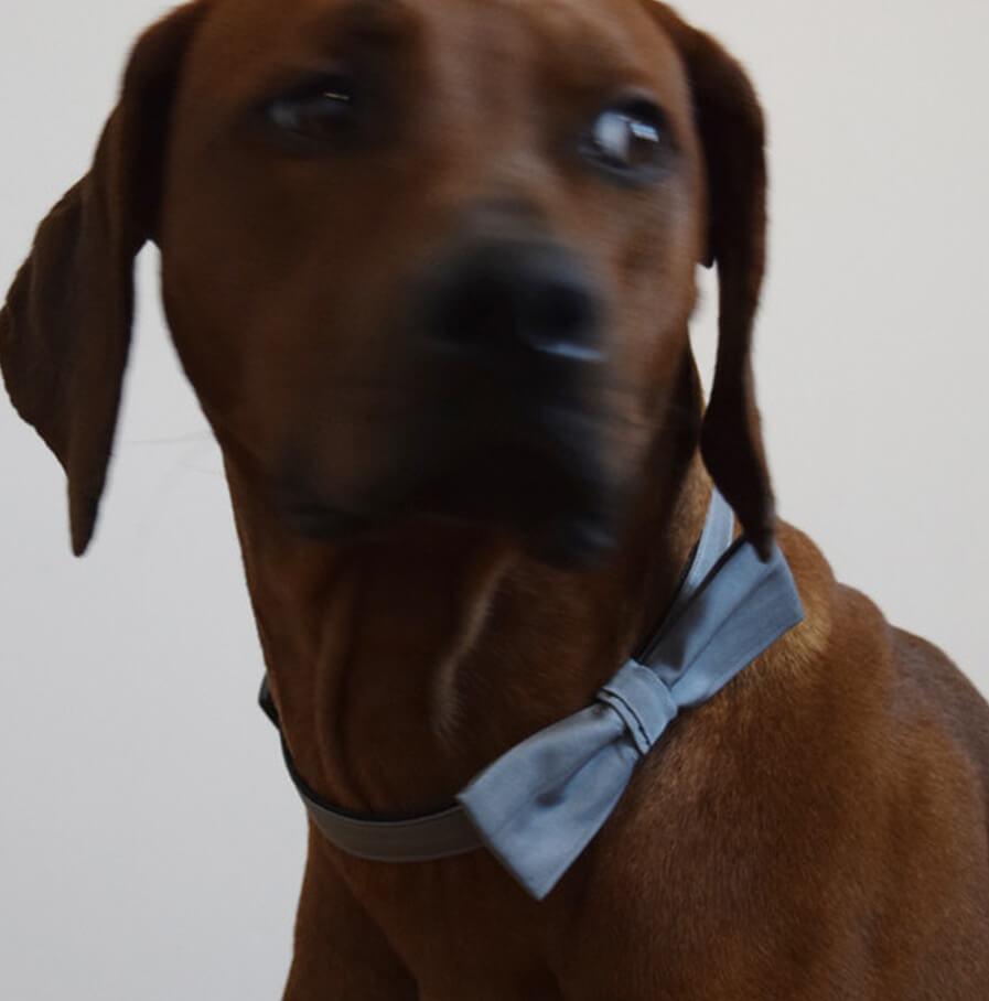 halsband prince made for dogs. Black Bedroom Furniture Sets. Home Design Ideas