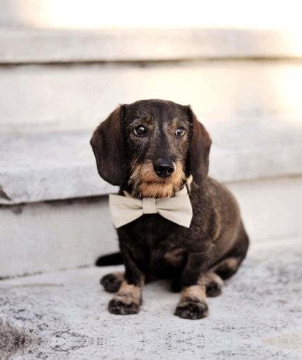 Hundehalsband mit Schleife