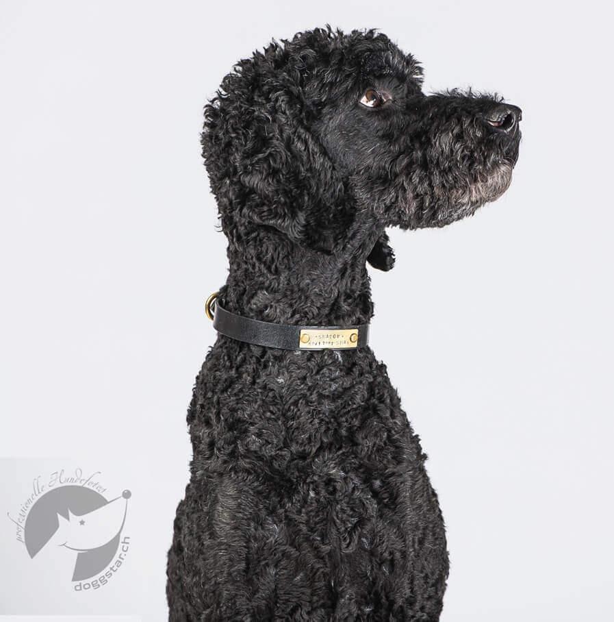 hundehalsband mit name made for dogs. Black Bedroom Furniture Sets. Home Design Ideas