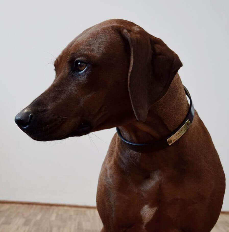 Schwarzes Hundehalsband Leder
