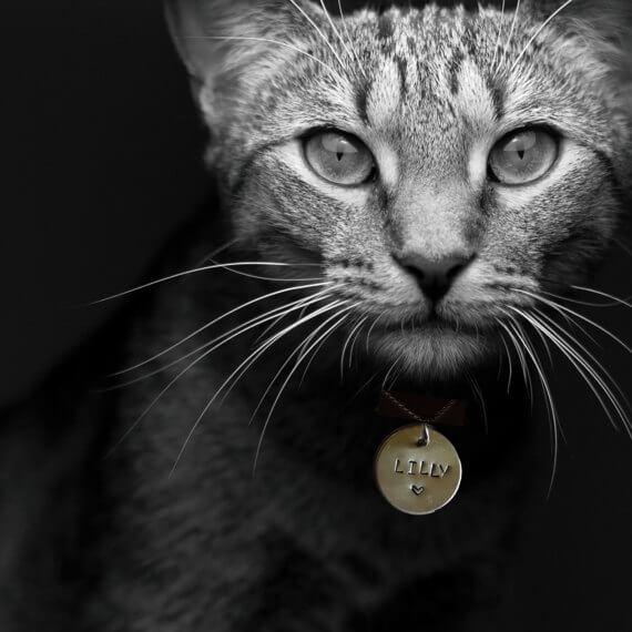 Katzenmarke