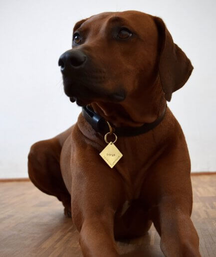 dog id tag with name and phone
