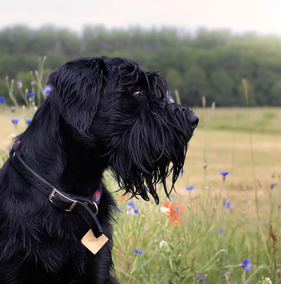 Hundemarke mit Namen in Rautenform