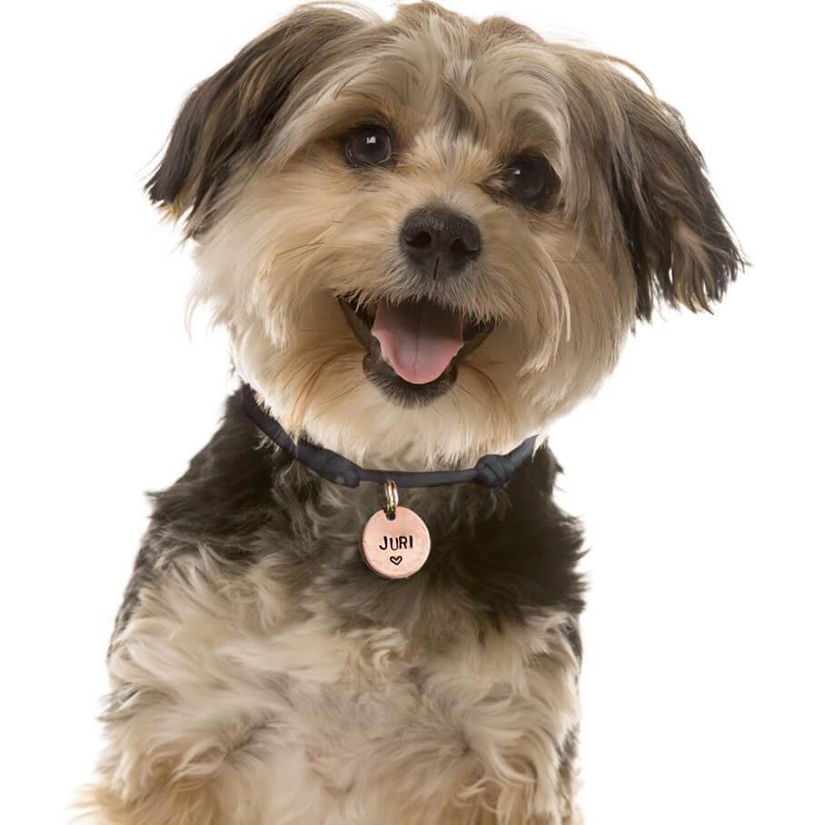 Hundemarke personalisiert mit Namen und Herz